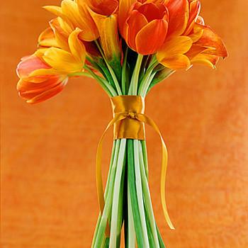 Vivid Tulips