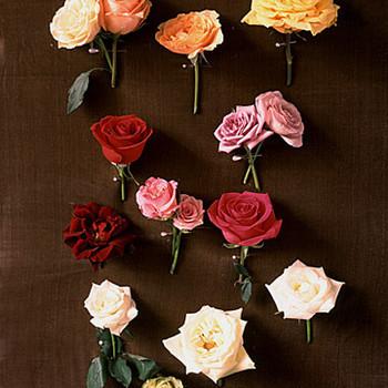 Wedding Roses 101