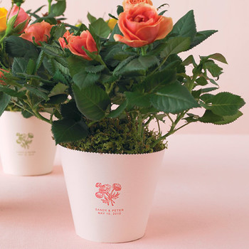 Rose Plant How-To