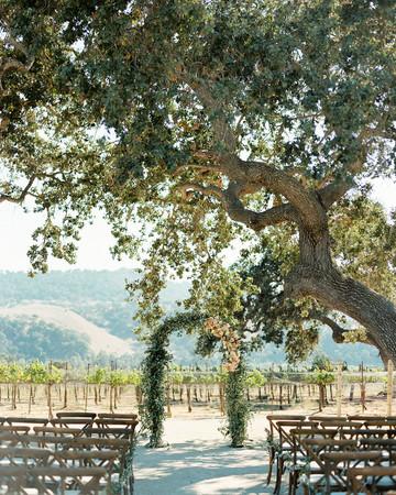 giant oak tree outdoor wedding ceremony vineyard venue