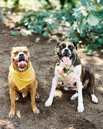 charla jesse wedding dogs