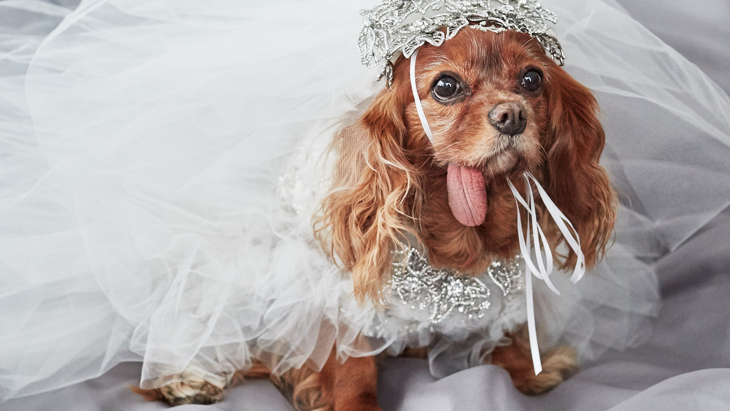 EXCLUSIVE: Get a First Look at Toast the Dog\'s Marchesa Wedding ...