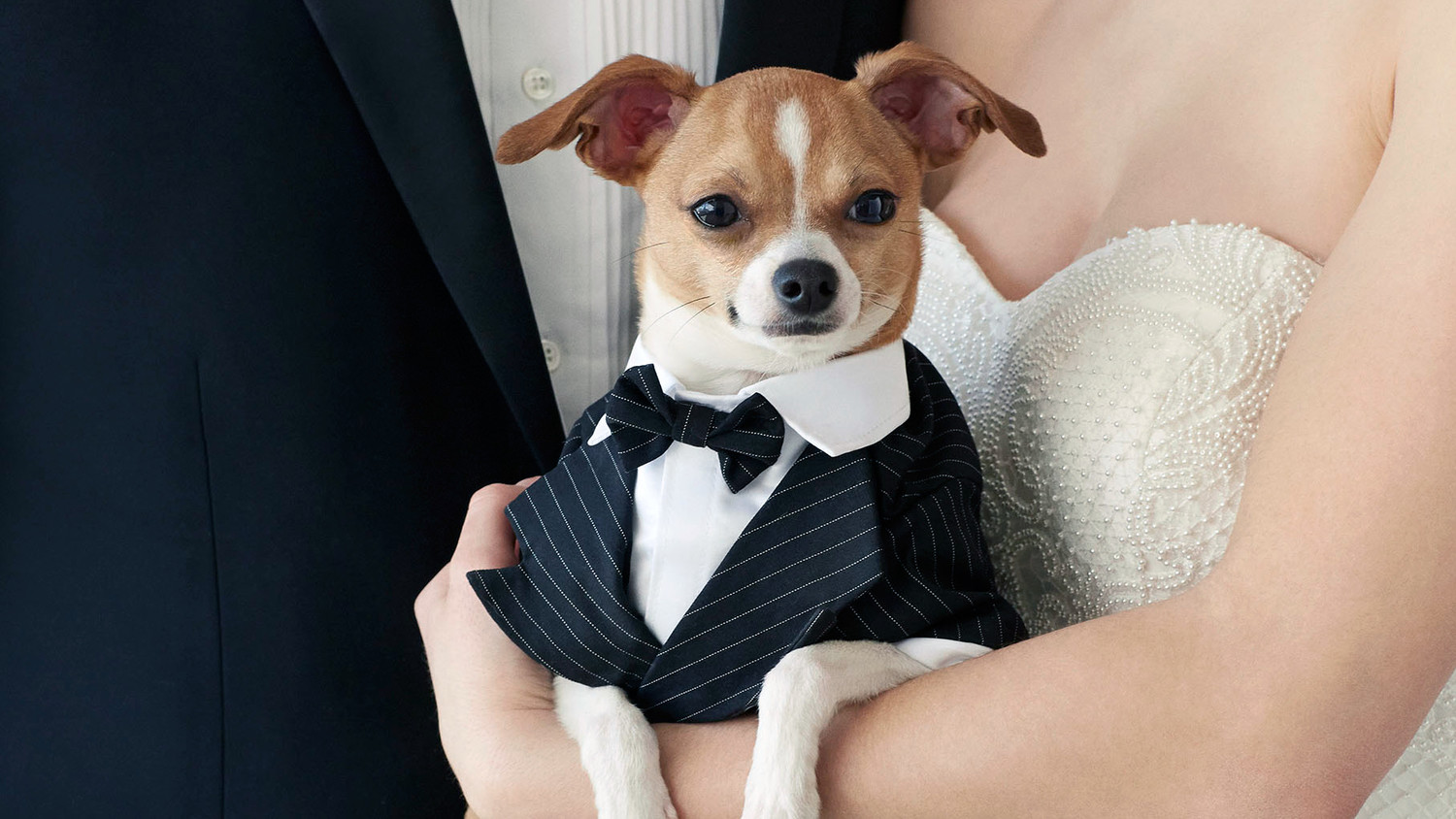 Awesome Wedding Attire For Dogs Ideas - Styles & Ideas 2018 - sperr.us