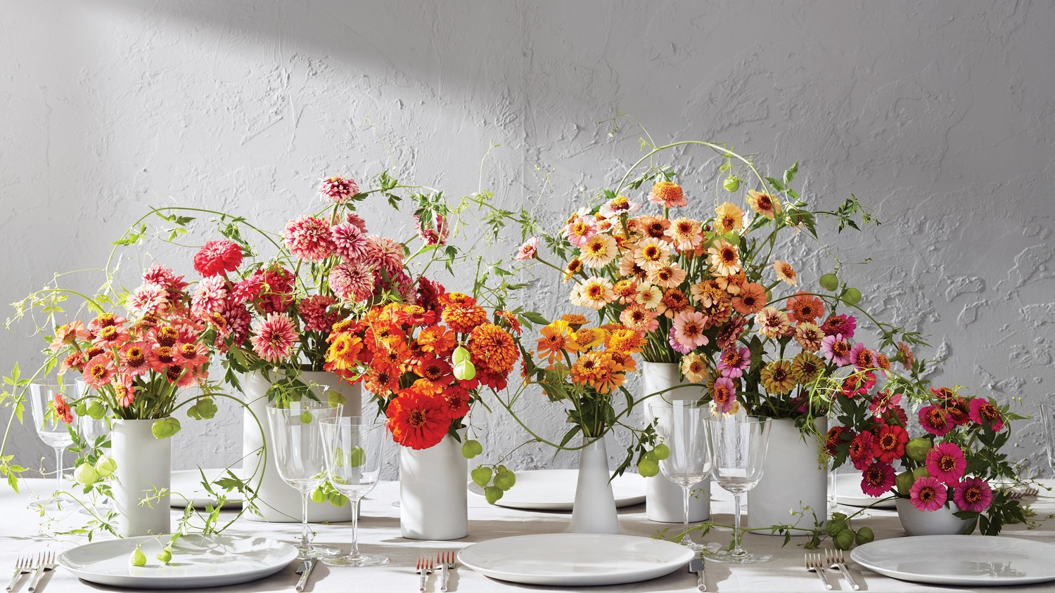 Vases Of Orted Zinnias And Scabiosas