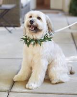 dog-mwd109296.jpg