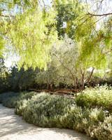 trees-d109296.jpg