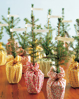 seedling centerpieces