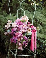 orchids-2-mwd107620.jpg