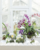 orchids-5-mwd107620.jpg