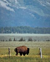 ml454h_sum02_buffalo.jpg
