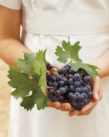 mw104516_0110_grapes.jpg