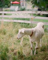 goat-abigail-nathan-082.jpg