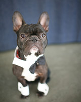 bow-ties-dogs-angus-0814.jpg