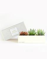succulent boxes