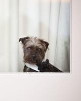 rw_0211_vanessa_gavin_puppy.jpg
