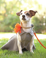 gabe-amy-dogs4-008-mwd108251.jpg