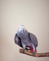 rw-laura-justin-bird-ms107644.jpg
