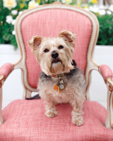 Dog on Pink Wedding Chair