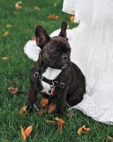 sarah-tom-dog-3841-mwds110093.jpg