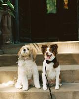 tiler-robbie-dogs-001-d111357.jpg