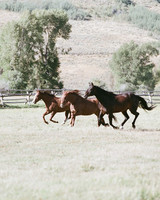 horses running outside at jackson hole