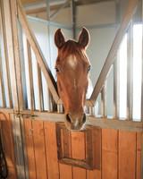 rw-laura-justin-horse-ms107644.jpg