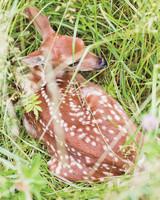 alanna-craig-deer-0855-mwds110658.jpg