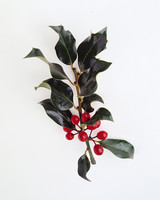 flower-glossary-holly-a98432-0415.jpg