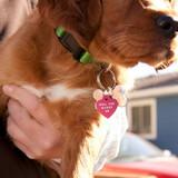 pet-proposal-angela-taylor-puppy-0215.jpg