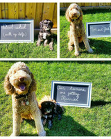 engagement instagram dogs
