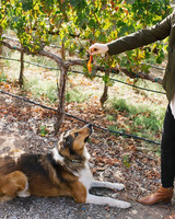 calistoga ranch pet friendly hotel