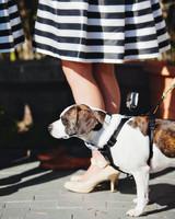 casey-ross-wedding-dog-539-s111514-1114.jpg