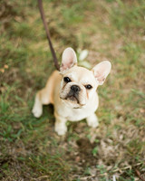 regina-jack-wedding-dog-45-s111820-0215.jpg