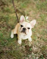 regina-jack-wedding-dog-45-s111820-0215.jpg