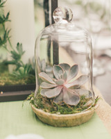 cloche succulent wedding centerpiece