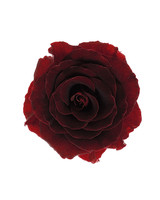rose-color-meanings-burgundy-a98432-0715.jpg