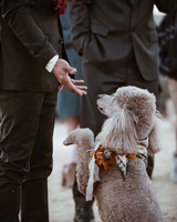 darcy matt wedding dog