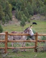 lizzy-pat-wedding-donkey-104-s111777-0115.jpg