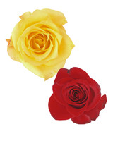 rose-color-meanings-yellow-red-a98432-0715.jpg