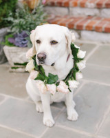 destiny-taylor-wedding-dog-211-s112347-1115.jpg
