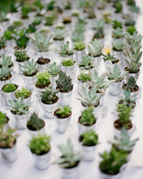 Succulent Wedding Favors in Silver Buckets