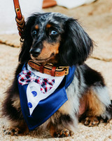 wedding dog bow tie