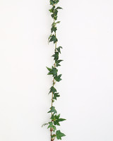 flower-glossary-ivy-green-string-a98432-0415.jpg