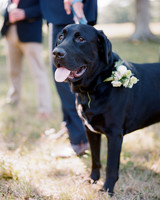 jocelyn-graham-wedding-dog-0598-s111847-0315.jpg