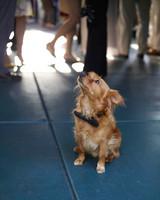 bow-ties-dogs-peanut-wd105308-msw-10-551-0814.jpg