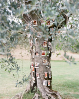 family tree photo display