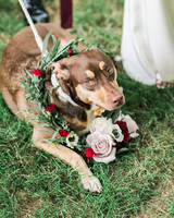 vanessa steven wedding dog