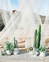 succulent and cacti alter decor