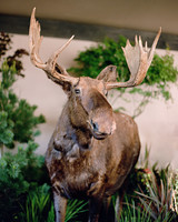 whitney zach wedding taxidermy moose