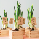 diy-floral-favors-daffodils-in-sake-cups-sp10-0615.jpg